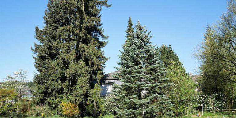 Prächtiger Baumbestand